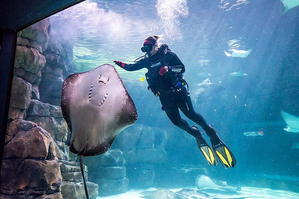 The aquarium in Gatlinburg