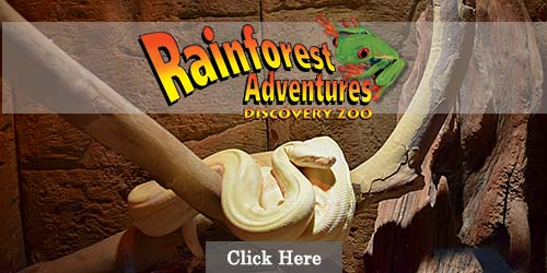 Rainforest Adventures